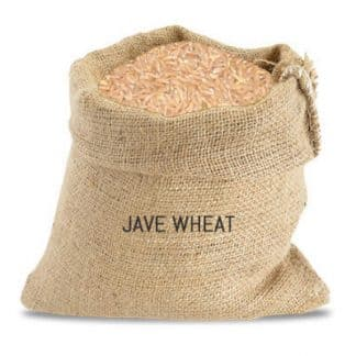 jave wheat